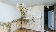 A room showing mould