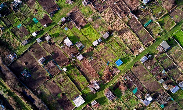 Allotments could save us post-Brexit and beyond, says professor