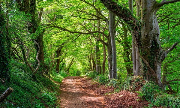Councils are failing to protect ancient woods, says Woodland Trust